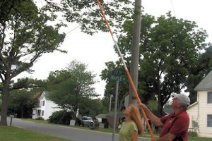Recent Storm Damage to Area Trees Benefits from Town Arborist