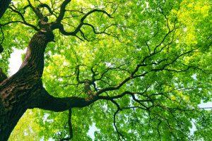 Basics: How to Prune a Tree