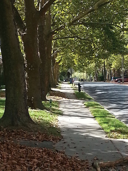 Tree Keepers Offers Free Walking Tour of Easton's Unique Trees