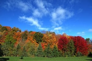 Why Do Trees Change Color?