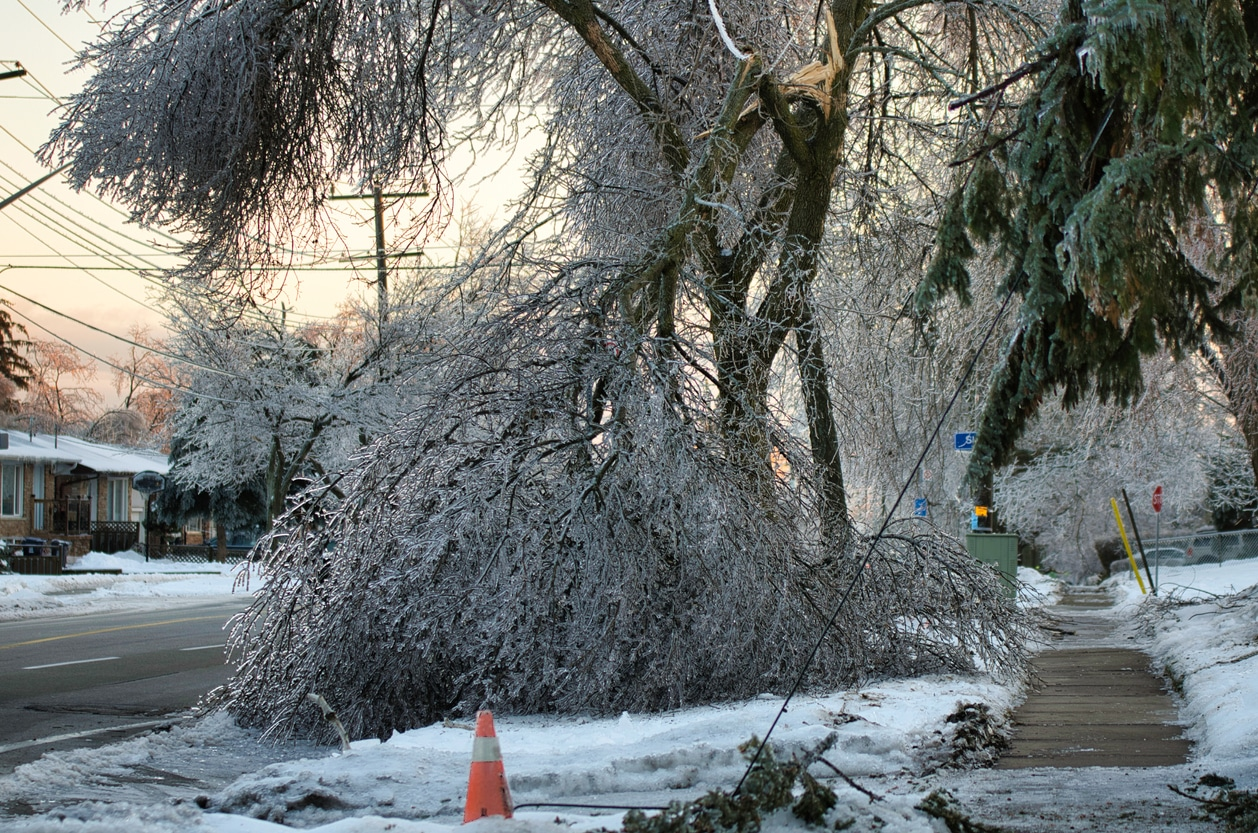 Ice Storm Damage to Trees